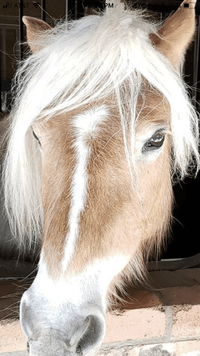 handsome_horse.PNG