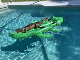 alligator_pool_float.jpg