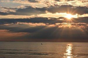 Gulls at dawn.jpg