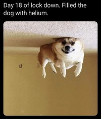 Coronavirus-quarantine-helium-filled-dog.jpg