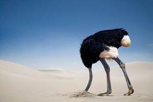 Ostrich-burying-head-in-the-sand.jpg
