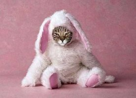 Cat-Dressed-as-a-Bunny-For-Halloween.jpg